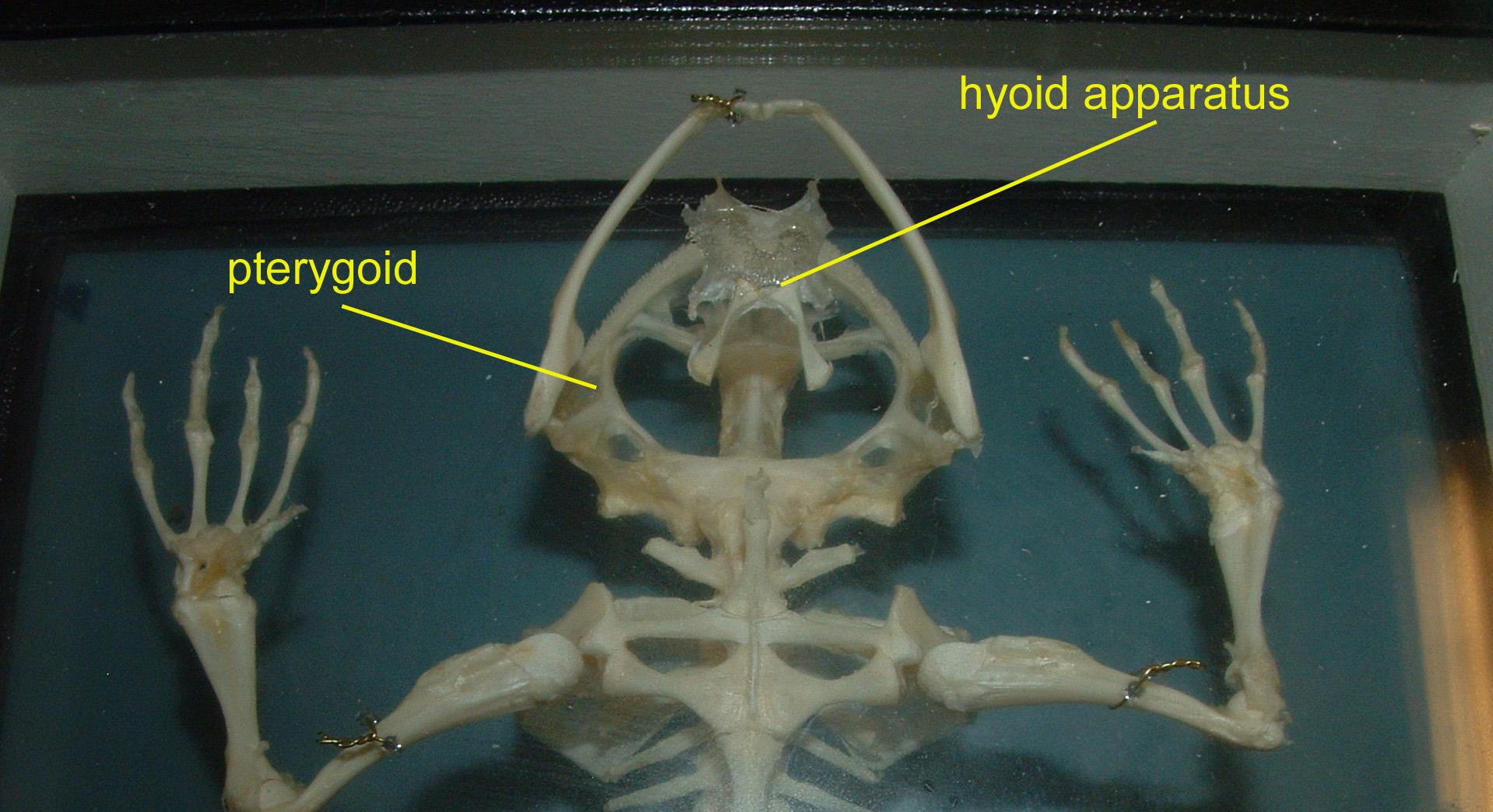 Ethmoid On Skull