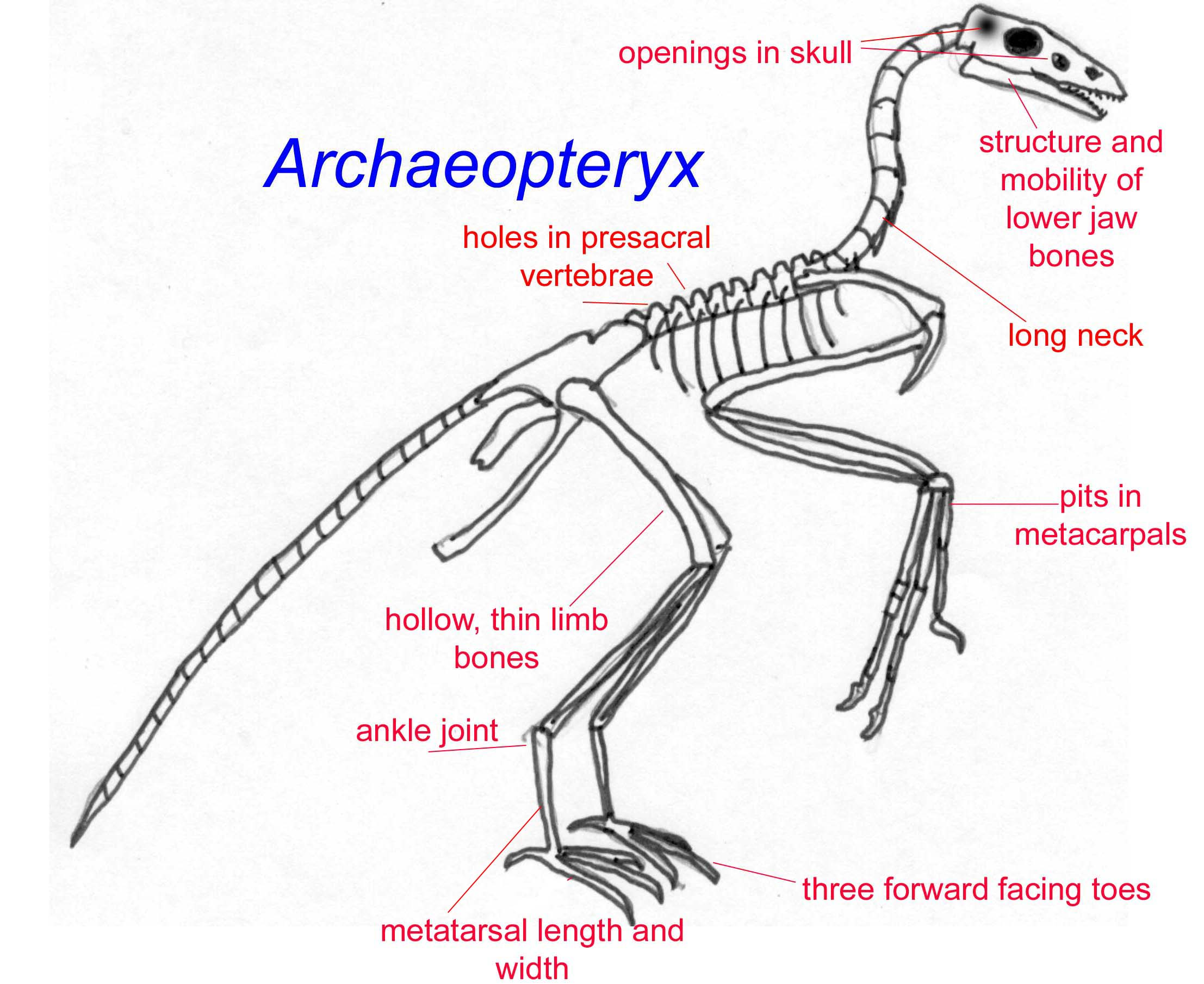 the characteristics of the velociraptor a type of dinosaur Pdf (acrobat) document file be sure that you have an application to open this file type before downloading and/or purchasing.