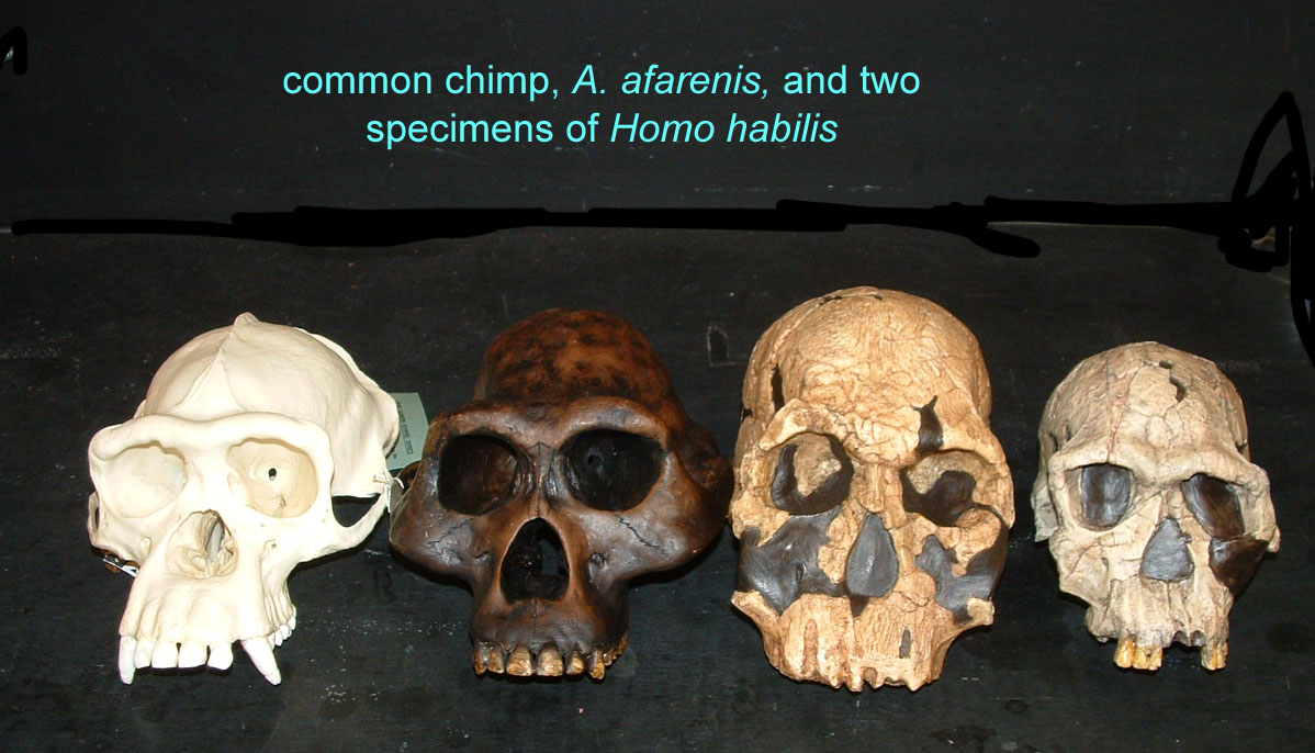 Homo erectus 1995 by joe damato 3
